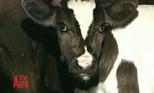 Ресурсосберегающие технологии механизации и логистики в молочном животноводстве