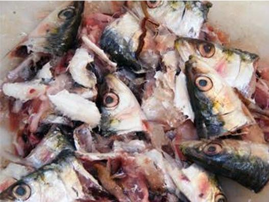 rybnye-othoddy