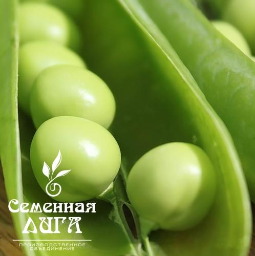 Goroh-sort-YAmalskij-1