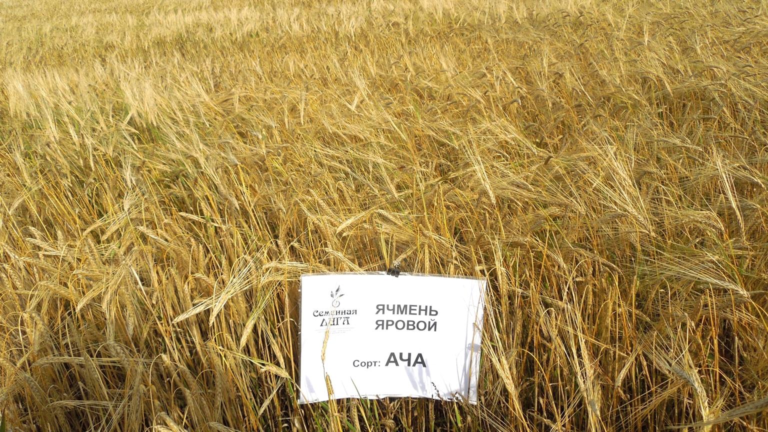 года осень купить семена овес в заб край Анапа Москва