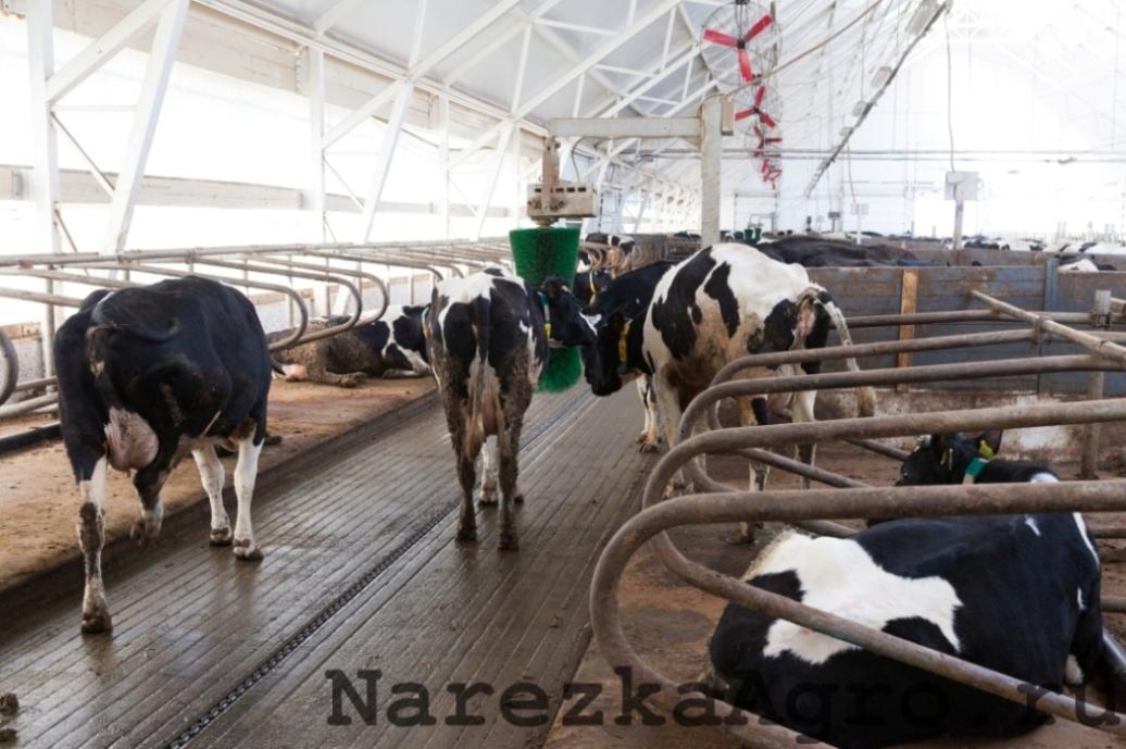 narezkaagro54
