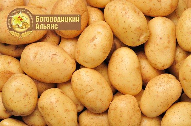 Foto-kartofelya-s-logo