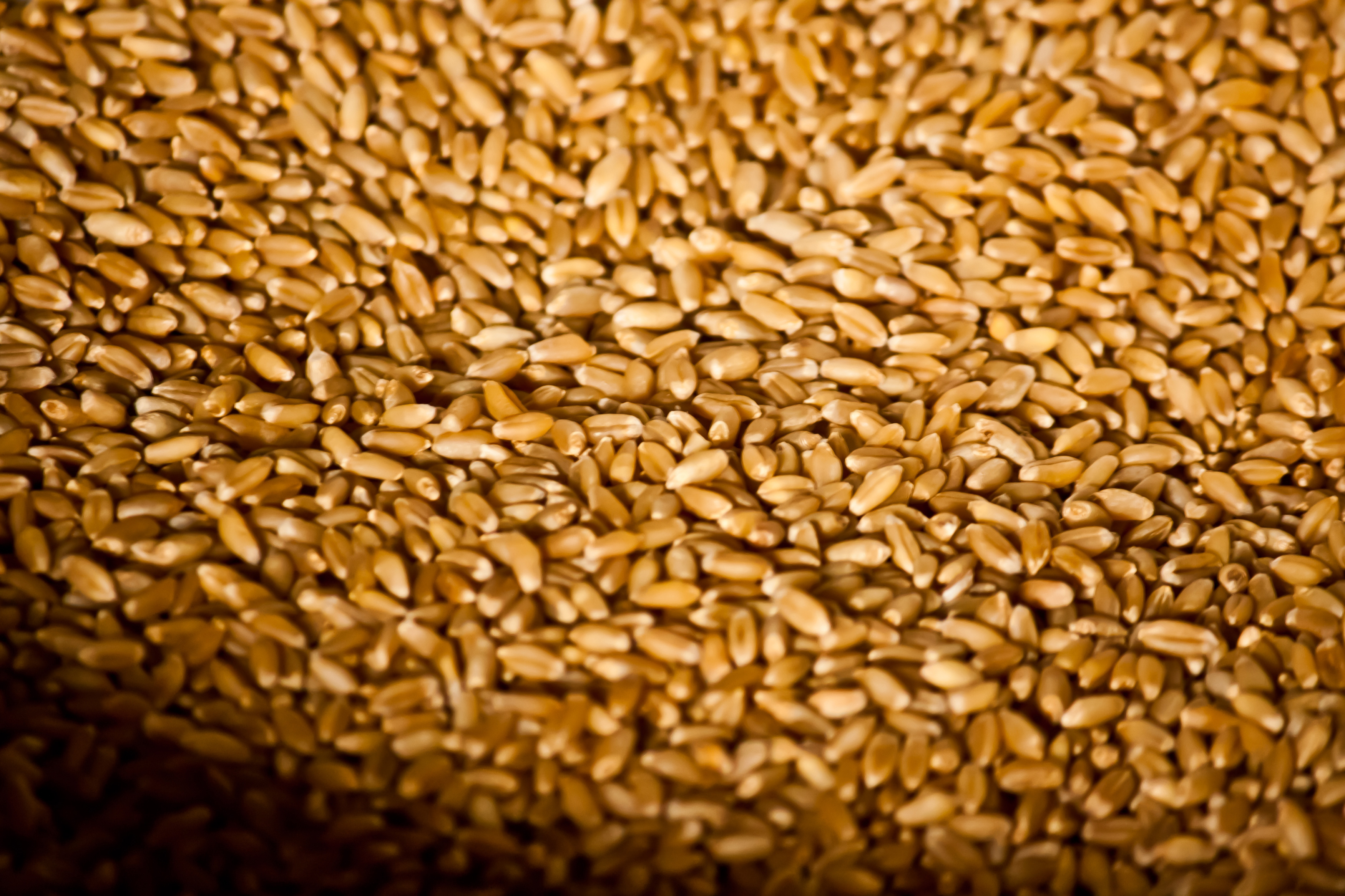 6338-wheat-grains-storage