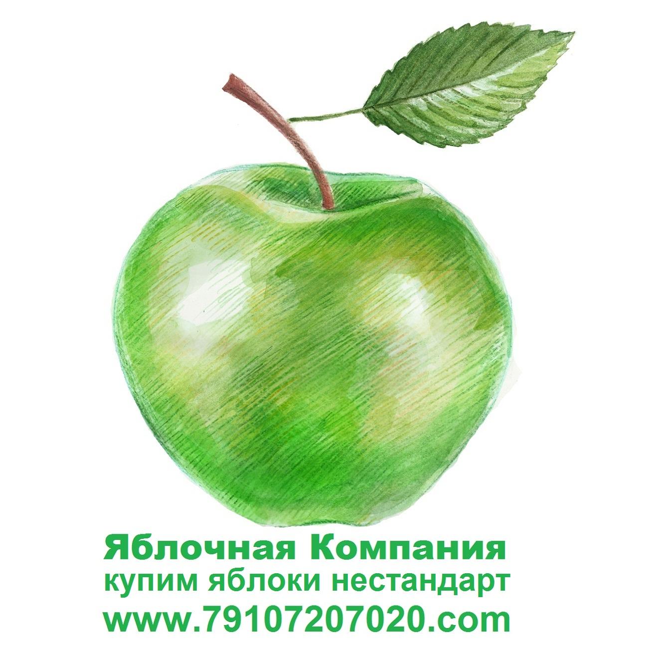 YAblochnaya-Kompaniya-www.79107207020.com-Kupim-yabloki-nestandart-dlya-promyshlennoj-pererabotki-v-RF-i-RB.-79107207020-79107207020-yandex.ru_