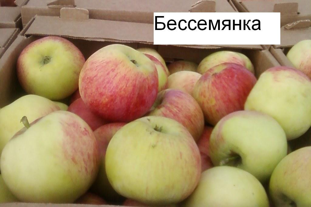 Bessemyanka-michurinskaya221