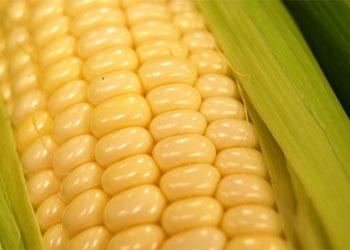 Ukrainskaya-kukuruza-v-kitae1