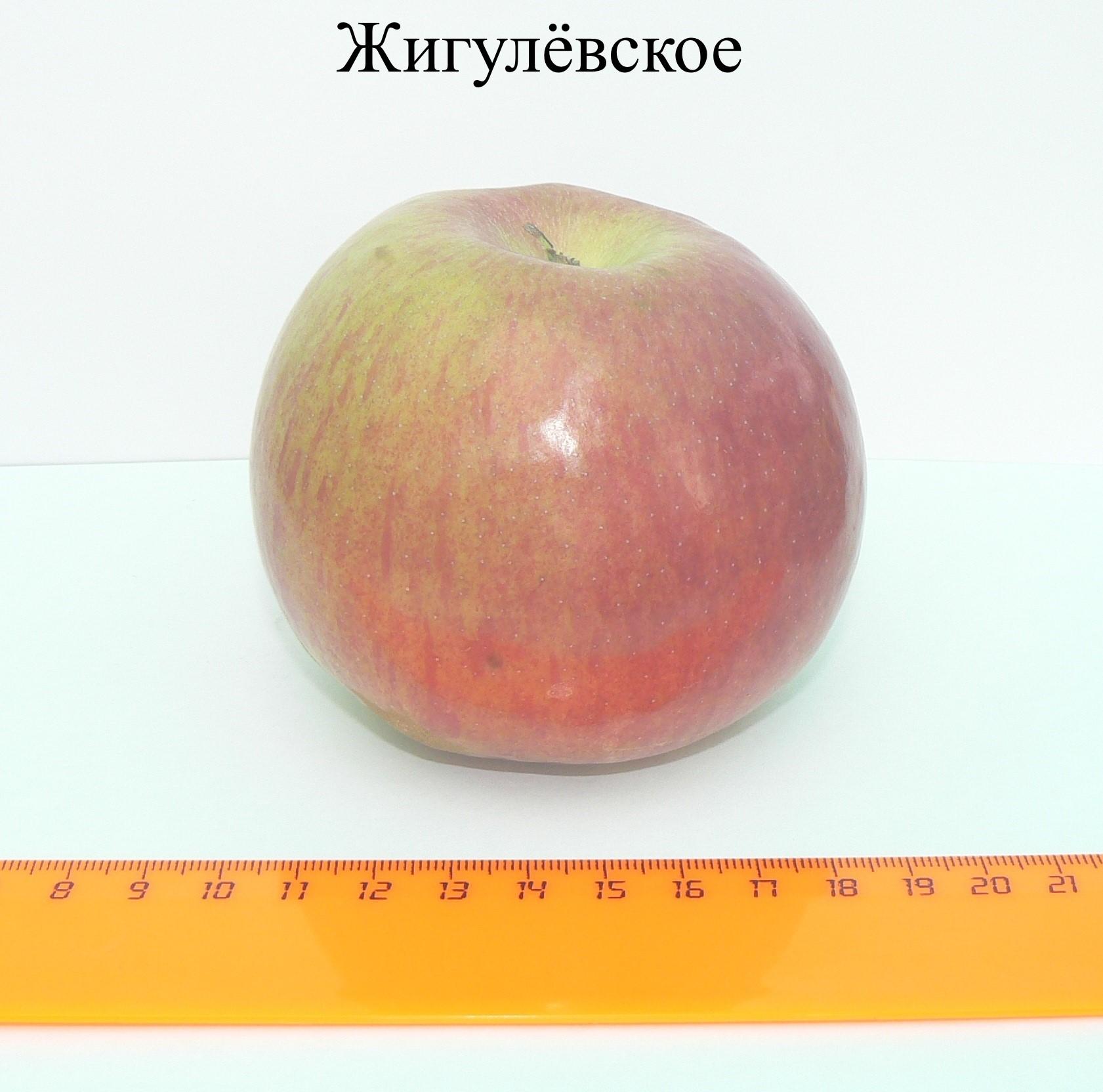 ZHigulyovskoe