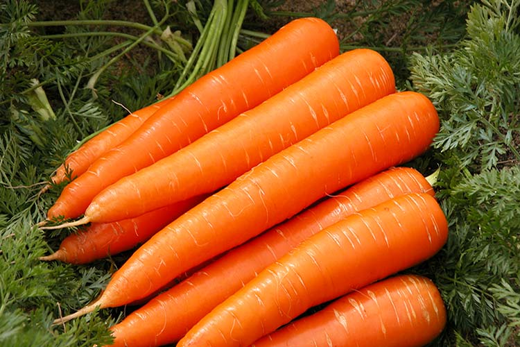 carrot-big