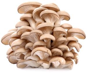 oyster_mushrooms