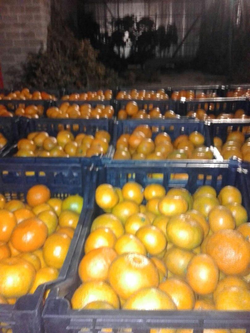 Mandariny-s-taroj-2