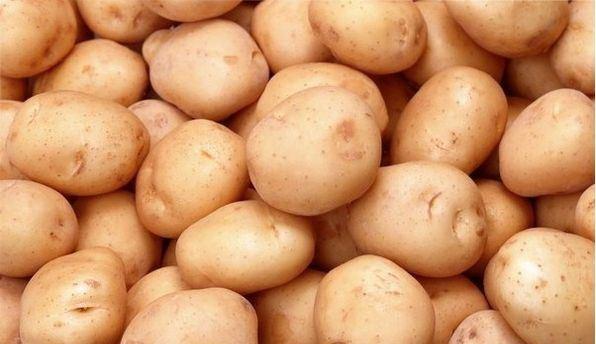 Kartofel01511