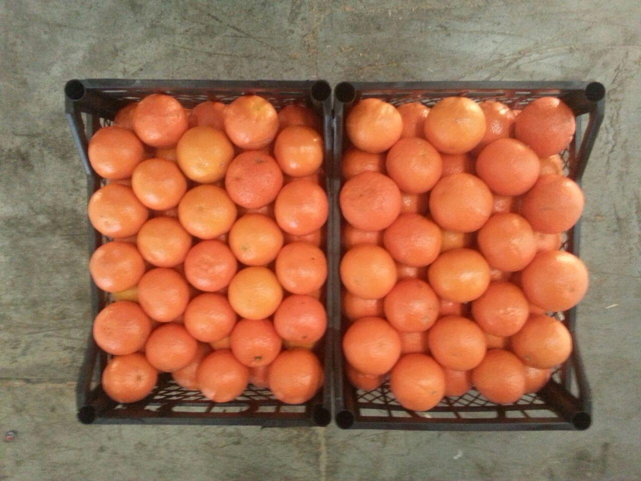 mandarin-Novo1