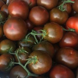 sasher-f1-semena-tomata-indet-chernoho-yuksel