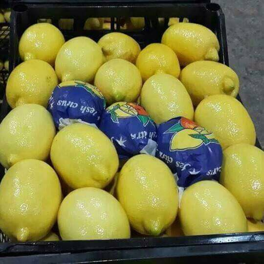 limon-6