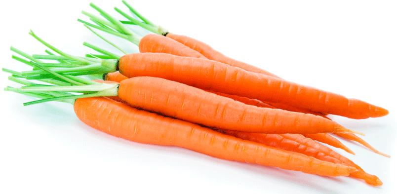 semena-morkov