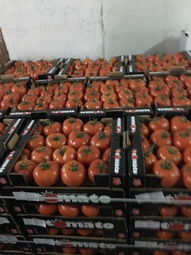 tomaty-2
