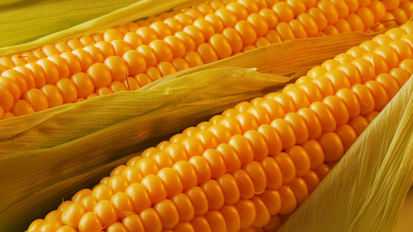 kukuruza7