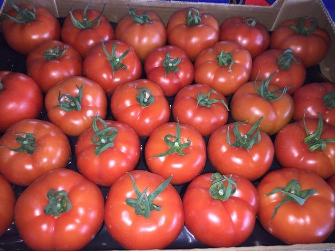 tomaty1