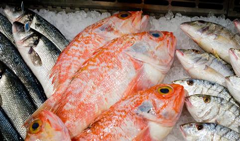 fish-fish-02