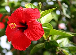 Indian Flower Names in French fleurs  Namaste French