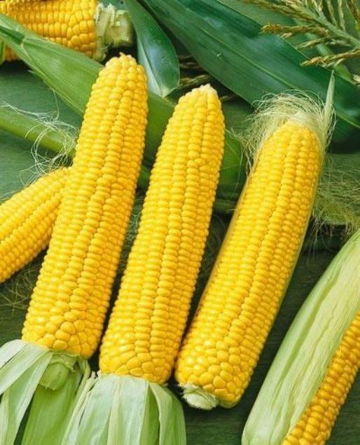 kukuruza6