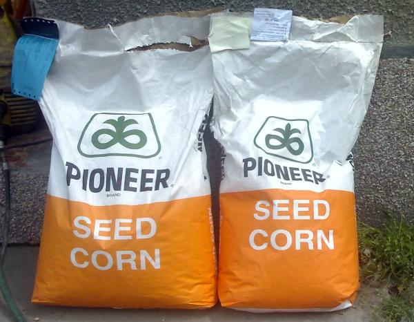 semena-kukuruzy-pioner-1