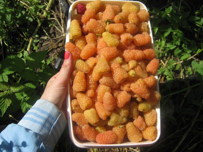 Malina-Oranzhevoe-chudo-3