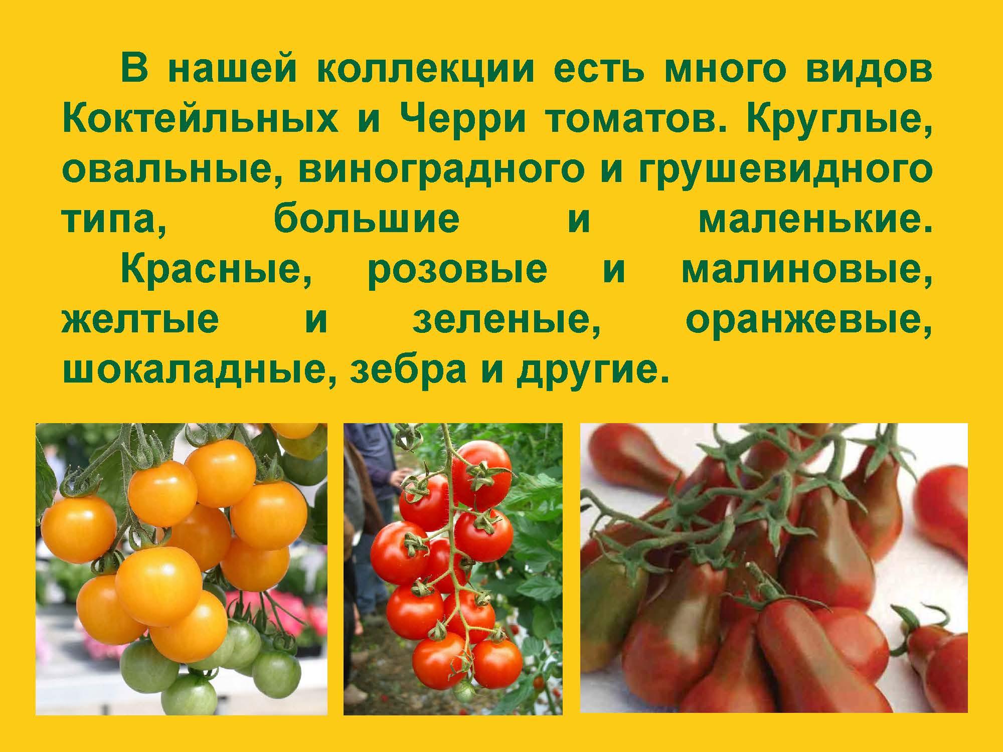 Prezentatsiya-III-NOV-01.04.2017_Stranitsa_20