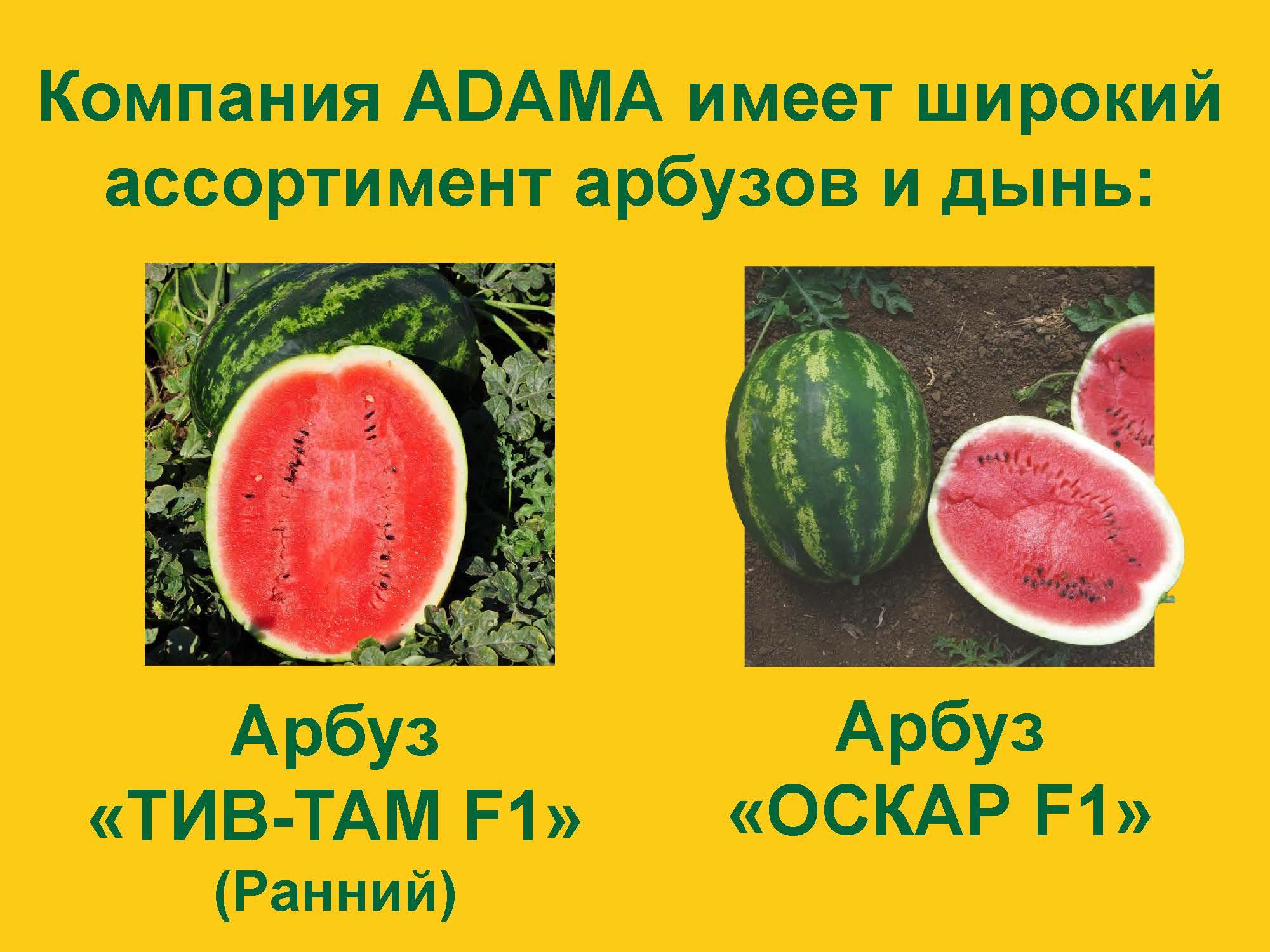 Prezentatsiya-III-NOV-01.04.2017_Stranitsa_31