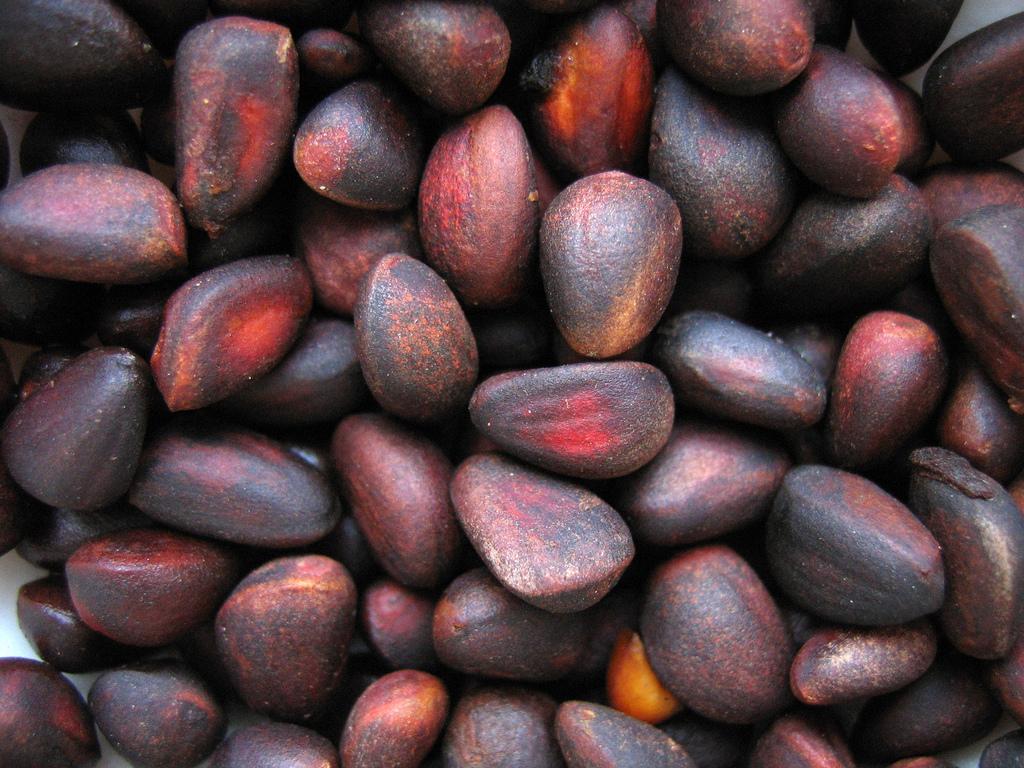 Seeds_of_Pinus_sibirica