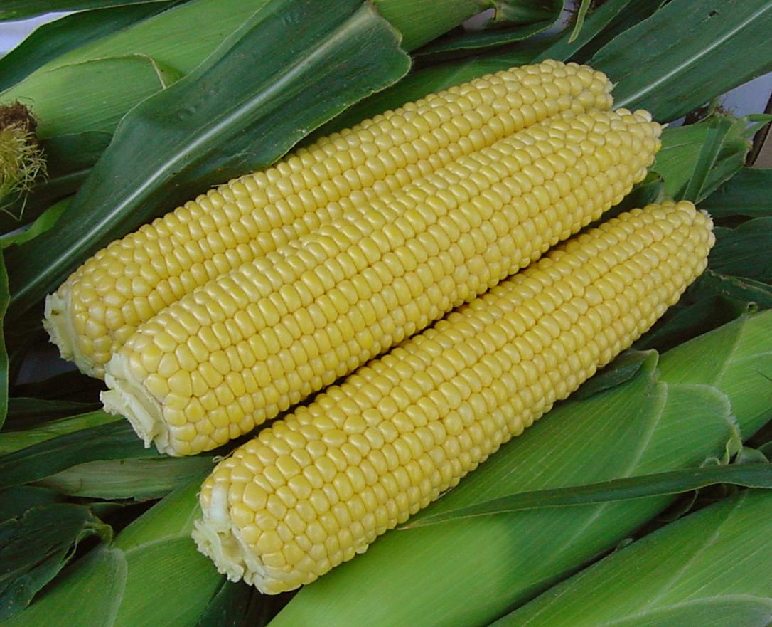 kukuruza-1