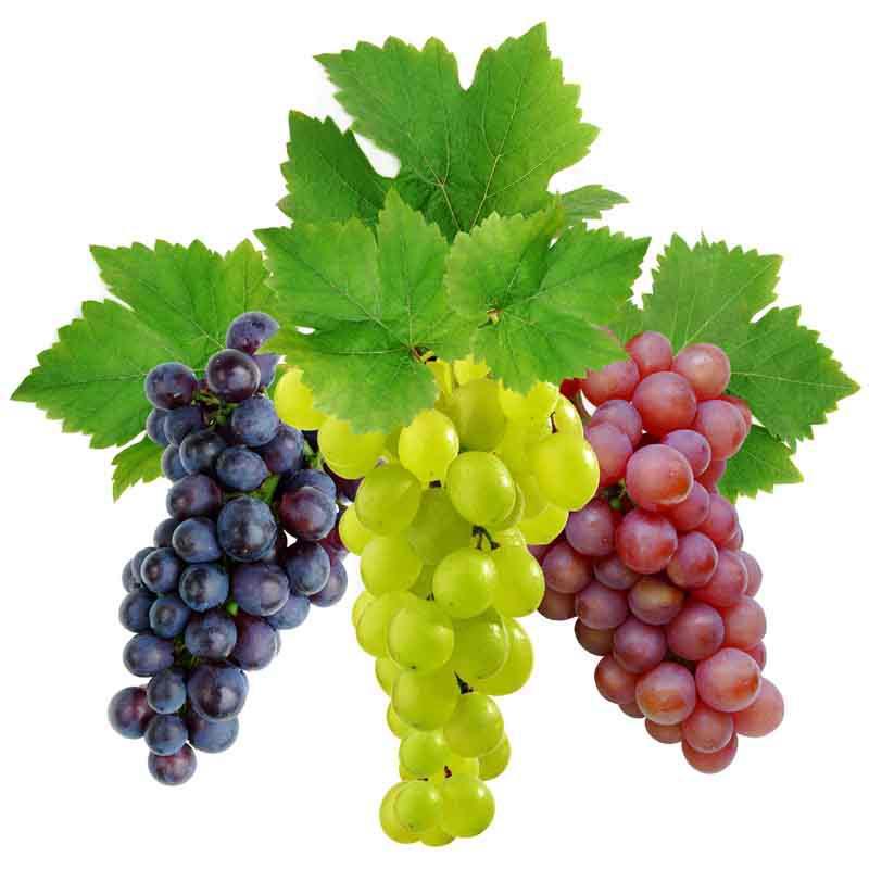 vinograd-kyltyrnii
