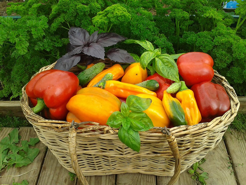 Pepper_Wicker_basket_Foliage_524527_1365x1024