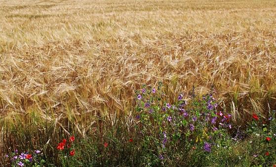 fields-1510844__340