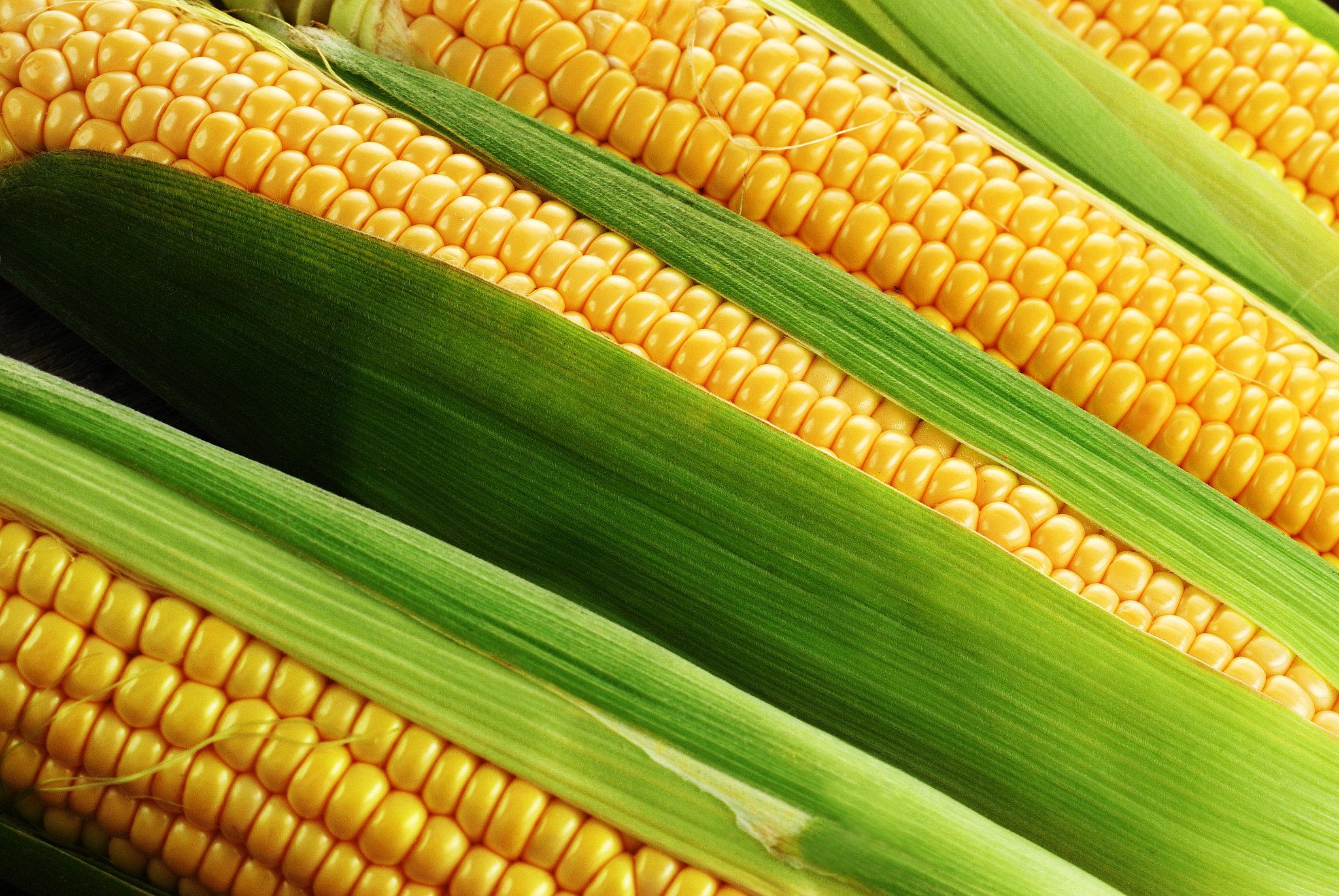 polza-kukuruzy