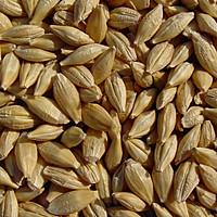 88234785_w200_h200_barley_10001000
