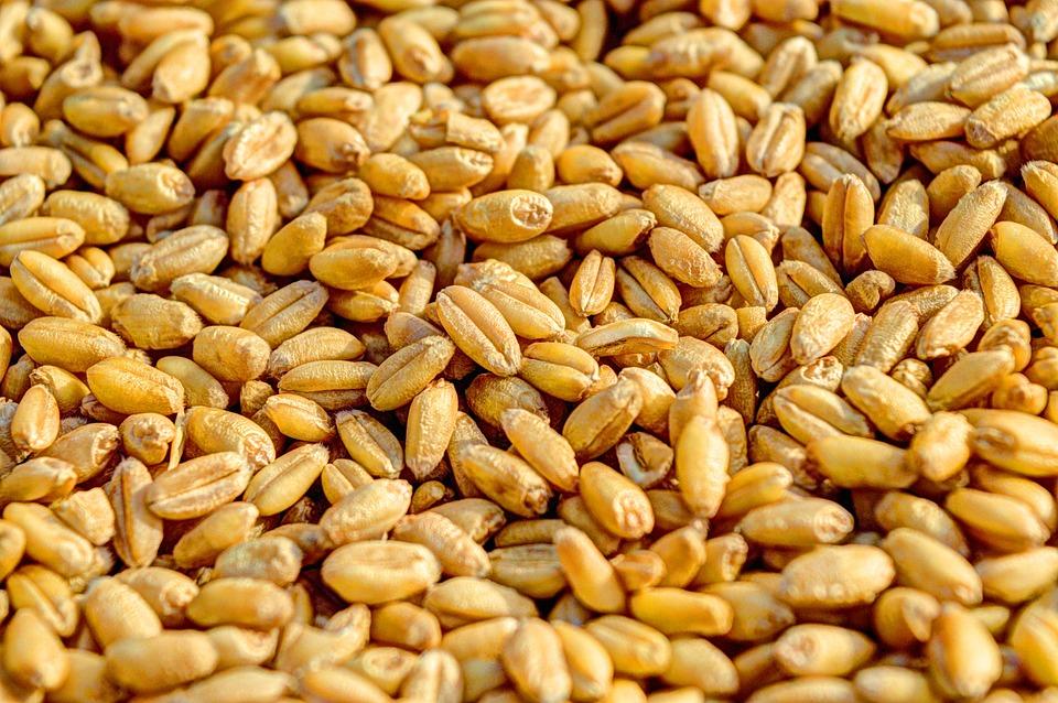 wheat-381848_960_720