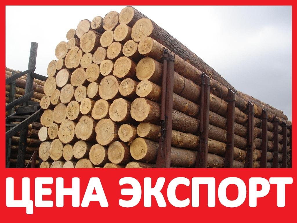 Les-Kruglyak-Kupit-Optom-TSena-Sosna-Kedr