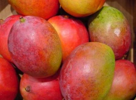 mango-fest