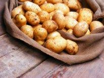 Semennoj-kartofel