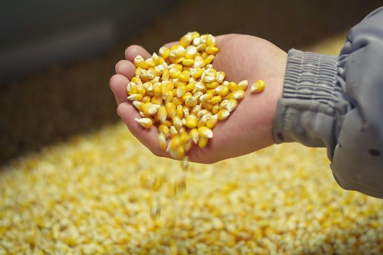 corn201709