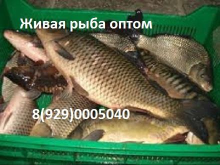svezhaya-ryba