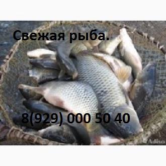 svezhaya-ryba1