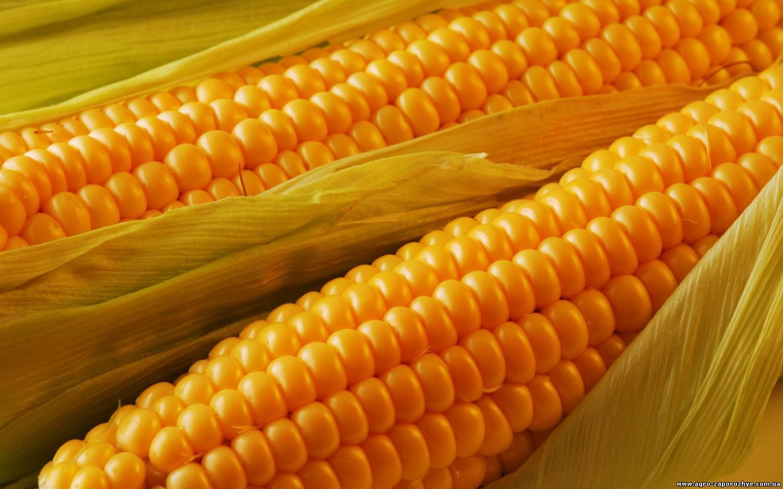 Kukuruza1