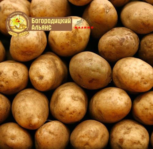 Prodovolstvennyj-kartofel