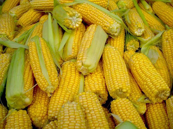 kukuruza-4