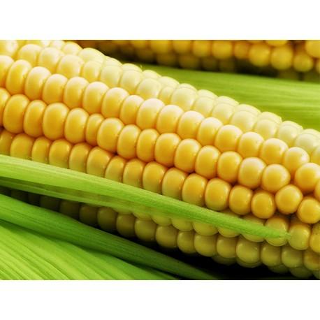 kukuruza-11
