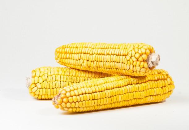 kukuruza-2