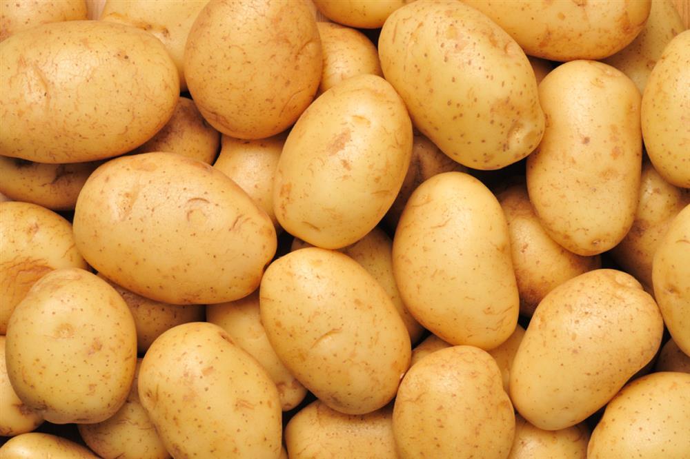 Sem.-kartofel