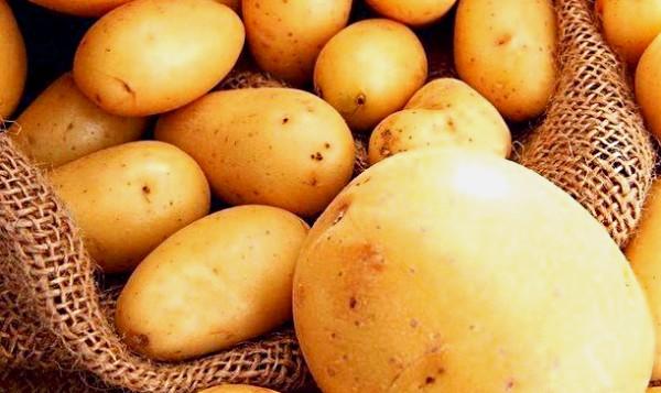 Prod.-kartofel